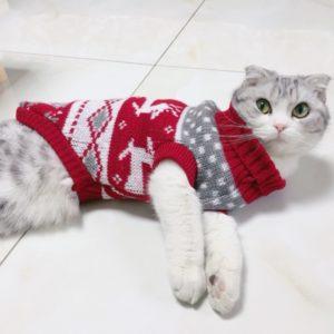 Zimní kočičí oblečky